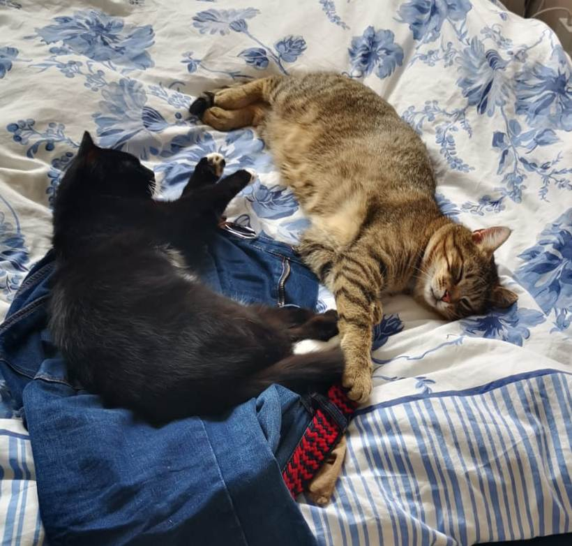 Morris & Socks